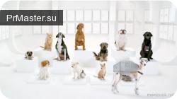 Новый ролик от Volkswagen продолжает идею ролика «The Force», «The Dog Strikes Back».