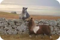 Ролик с танцующим пони стал вирусным